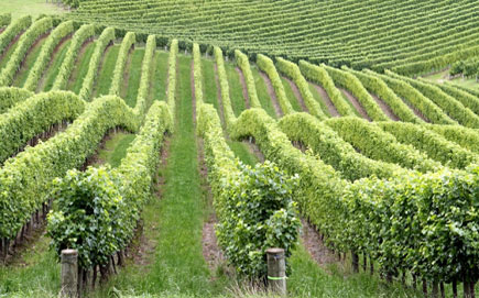 Wineries Long Island - Long Island Wine Tours - Gold Star Services NY