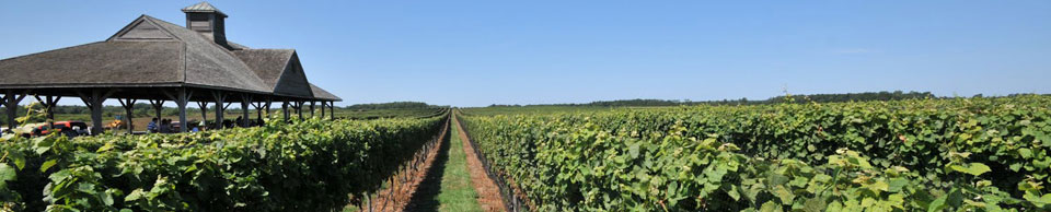 Long Island Wineries - Long Island Wine Tours - Gold Star Limousine