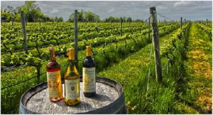 Long Island Vineyards - Gold Star Services, Long Island NY
